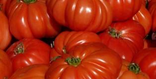 tomatoes-9358_1920